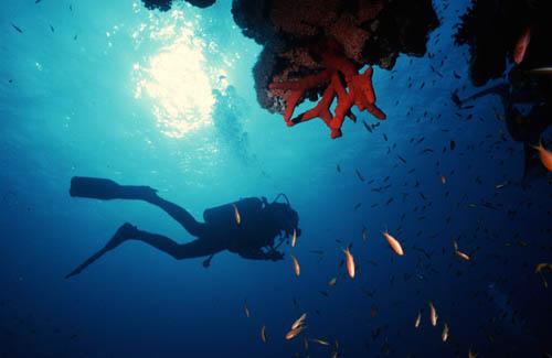 Buceo Safaga Mar Rojo