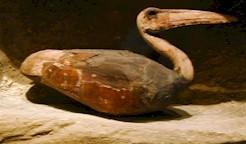 Momia ibis, sakkara