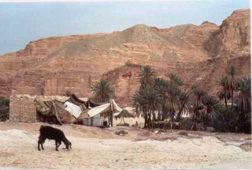 Oasis Ein Khudra, paraiso en el Sinai