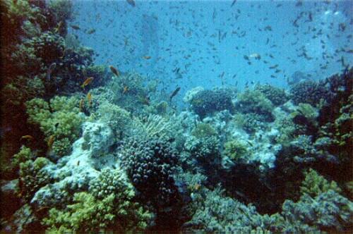 Hurgada, en la costa del mar Rojo