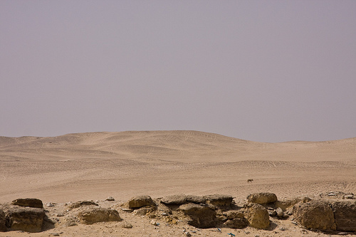Abu Gurab