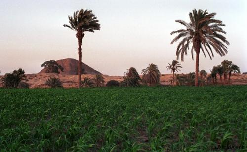 Visitando el oasis de El Fayum