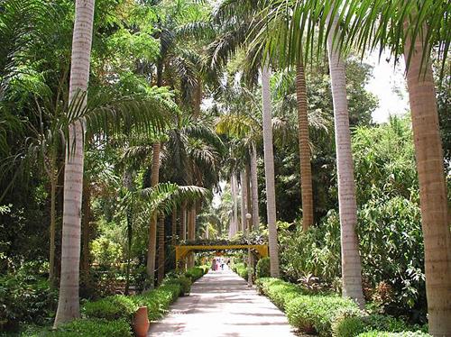 Jardin Botanico de Asuan