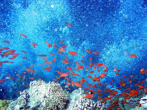 La riqueza marina del Mar Rojo
