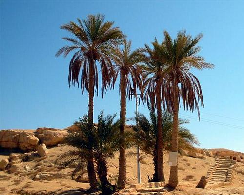 Oraculo de Amon, Oasis de Siwa
